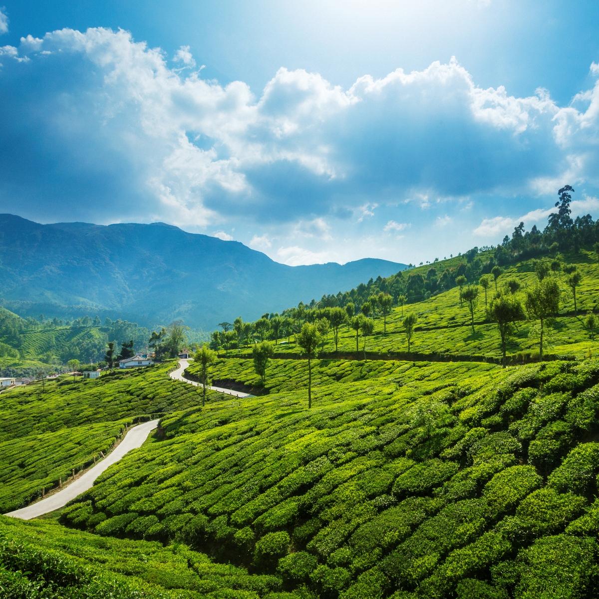 Kerala's Hill Stations, India