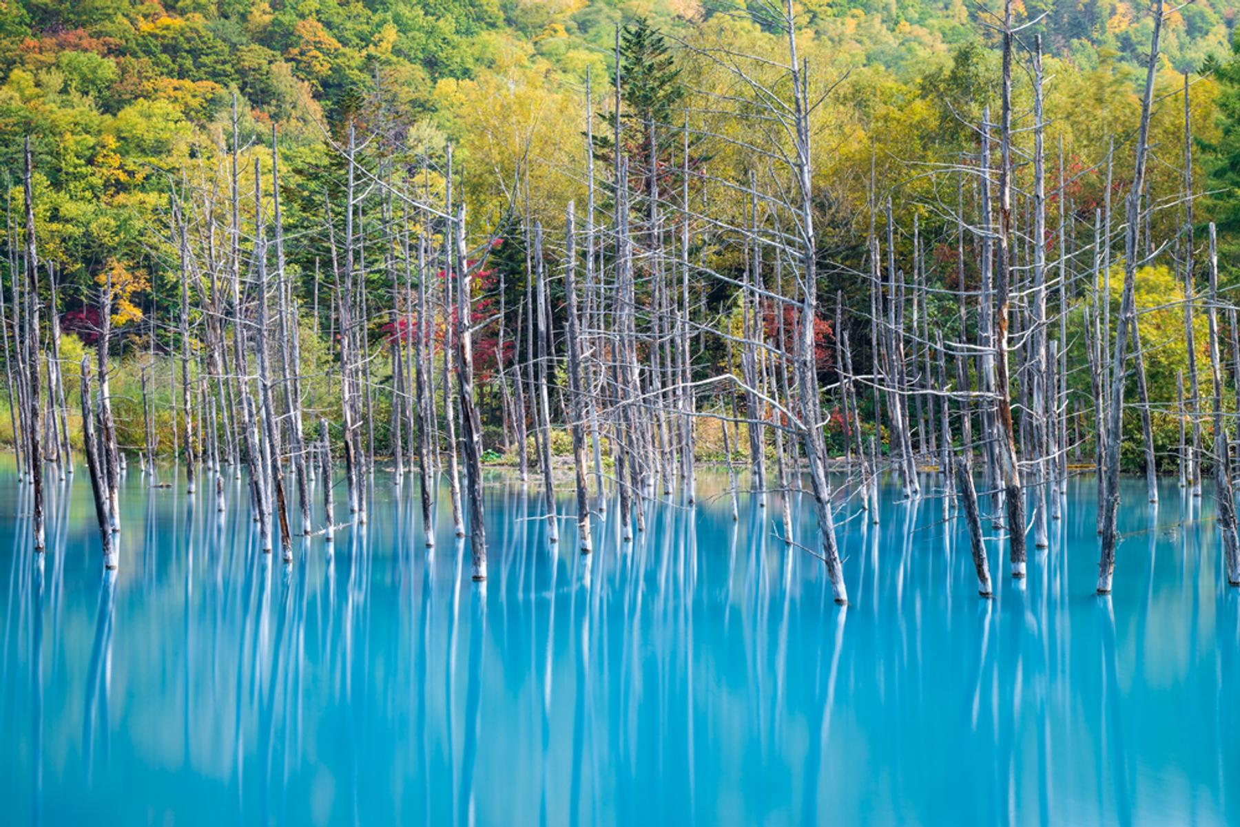 北海道・美瑛の青い池