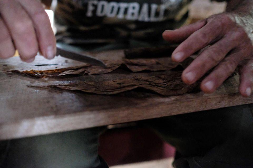 découpe des feuilles de tabac